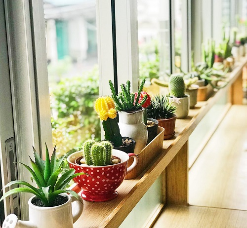 Plants on window